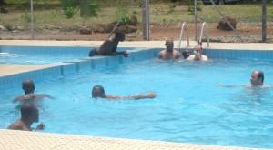 Novices en natation